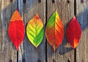fall-autumn-秋-英語